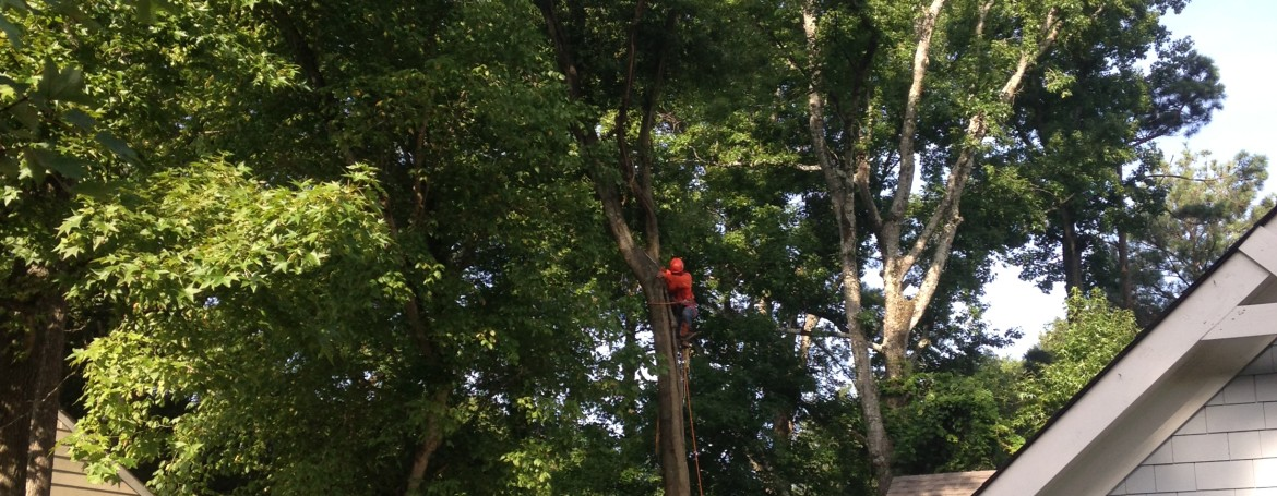 Tree Removal In Tight Areas